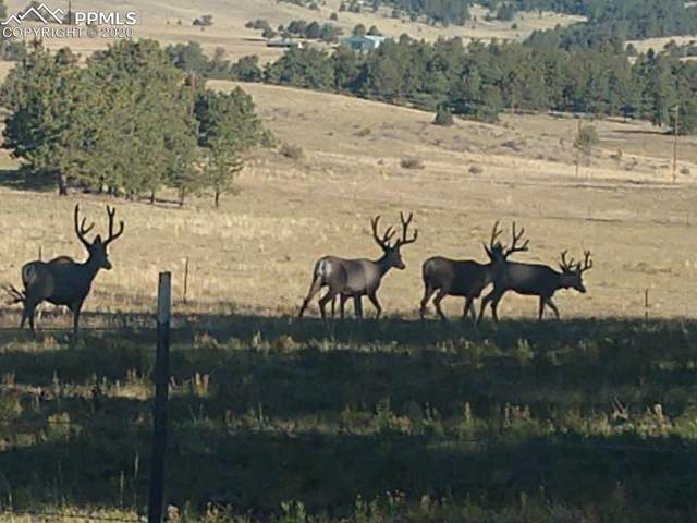 410 County Road 59 Road, Guffey, CO 80820 (#9881045) :: Finch & Gable Real Estate Co.