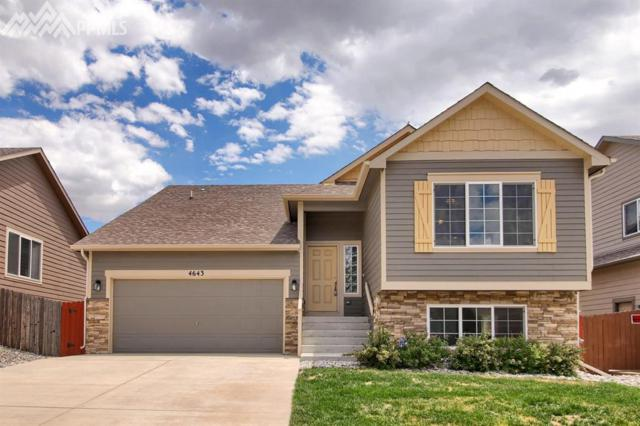4643 Whirling Oak Way, Colorado Springs, CO 80911 (#9969203) :: CENTURY 21 Curbow Realty