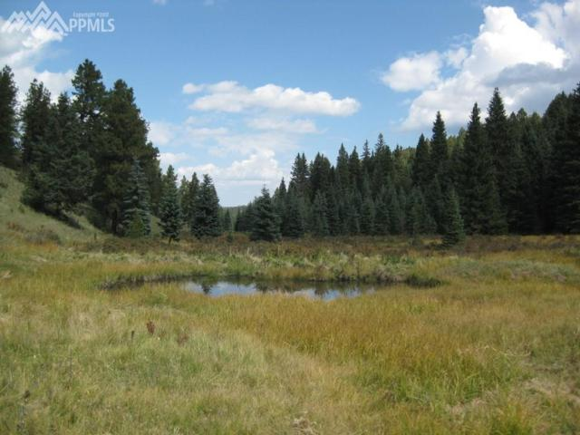 3800 N Elk Ridge, Divide, CO 80814 (#1513111) :: 8z Real Estate