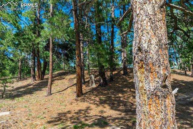 18845 Hilltop Pines Path, Monument, CO 80132 (#2594758) :: Fisk Team, RE/MAX Properties, Inc.