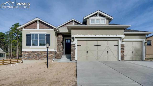 1446 Catnap Lane, Monument, CO 80132 (#4151397) :: Tommy Daly Home Team