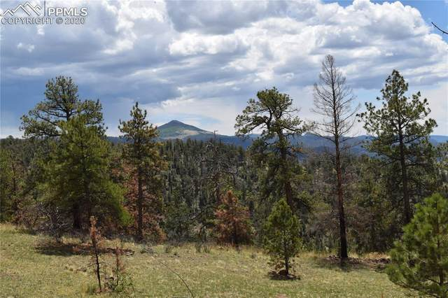 556 Chateau West Drive, Florissant, CO 80816 (#9631897) :: The Treasure Davis Team