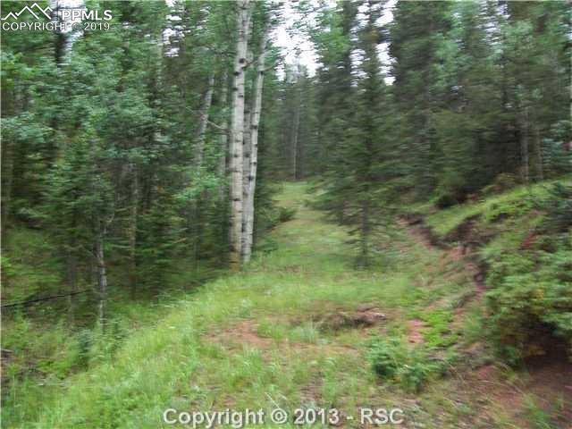 547 Spruce Lake Drive, Divide, CO 80814 (#1291763) :: The Kibler Group