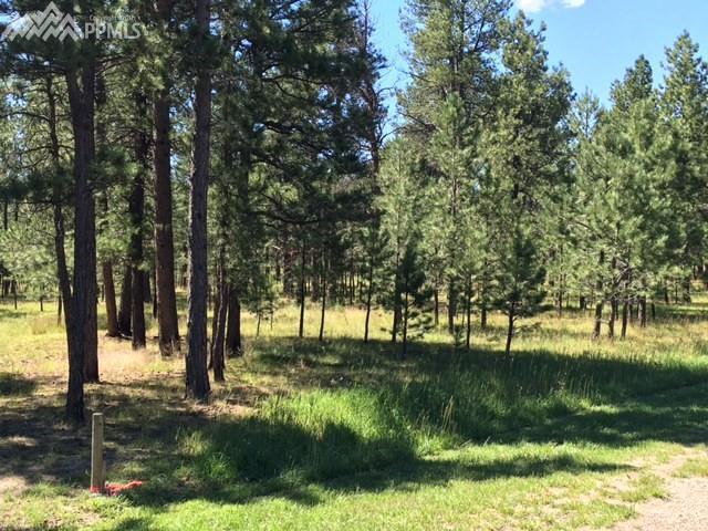 16164 Pole Pine Point, Colorado Springs, CO 80908 (#1787552) :: The Hunstiger Team