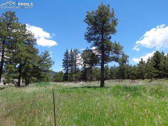 tbd Highway 67 Highway, Woodland Park, CO 80863 (#2147896) :: Perfect Properties powered by HomeTrackR