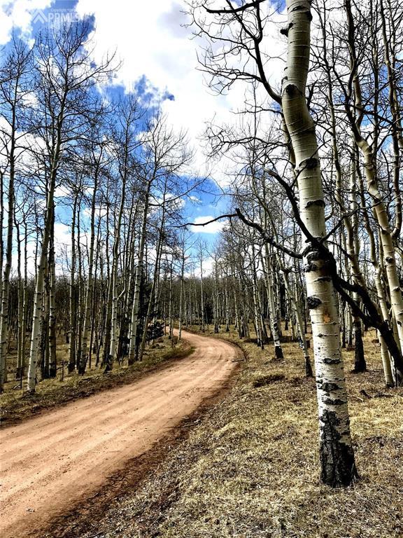 1395 W County Road, Cripple Creek, CO 80813 (#2459113) :: 8z Real Estate