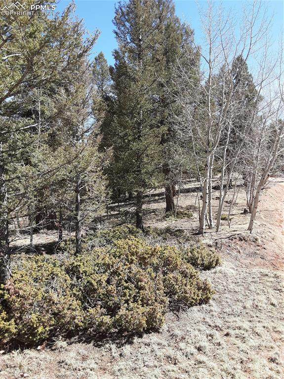 475 Crystal Drive, Cripple Creek, CO 80813 (#2470435) :: Action Team Realty