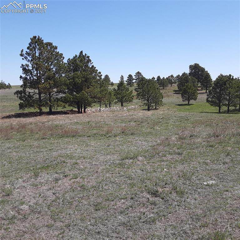 11556 Bison Meadow Court - Photo 1