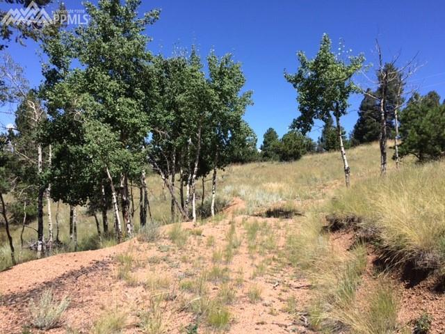 157 Paint Pony Lane, Florissant, CO 80816 (#3322943) :: Action Team Realty