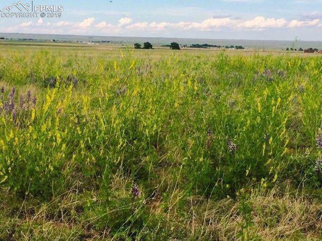 21334 Leona Homestead View, Colorado Springs, CO 80930 (#3431741) :: Colorado Home Finder Realty