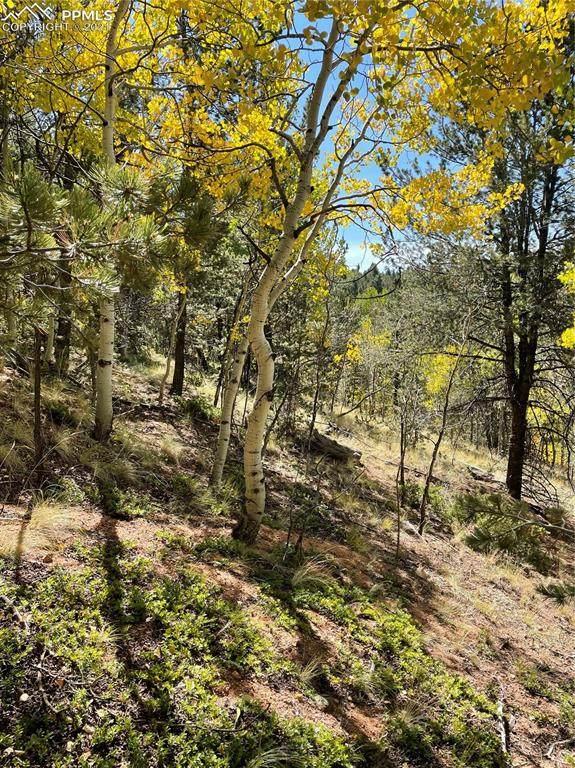 773 Calcite Drive, Divide, CO 80814 (#3581460) :: The Treasure Davis Team | eXp Realty