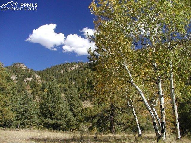 000 Secluded Canyon Heights, Florissant, CO 80816 (#5115602) :: Action Team Realty