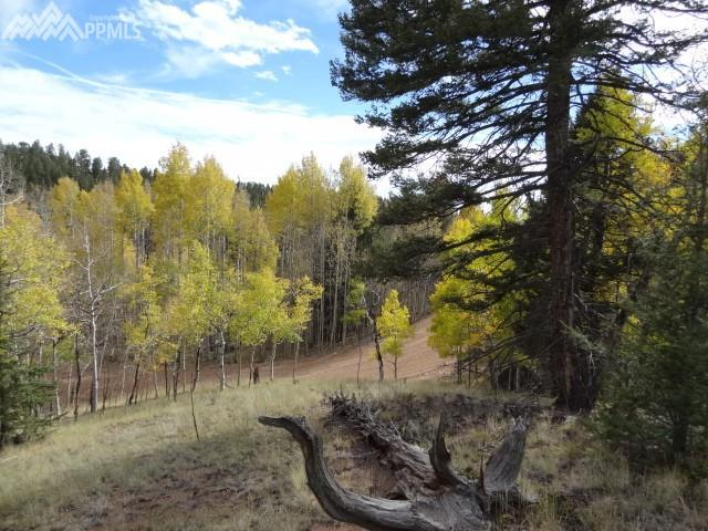 2911 N Mountain Estates Road, Florissant, CO 80816 (#5348607) :: The Treasure Davis Team