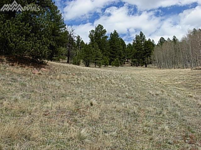6901 W Highway 24 Highway, Divide, CO 80814 (#6617884) :: 8z Real Estate