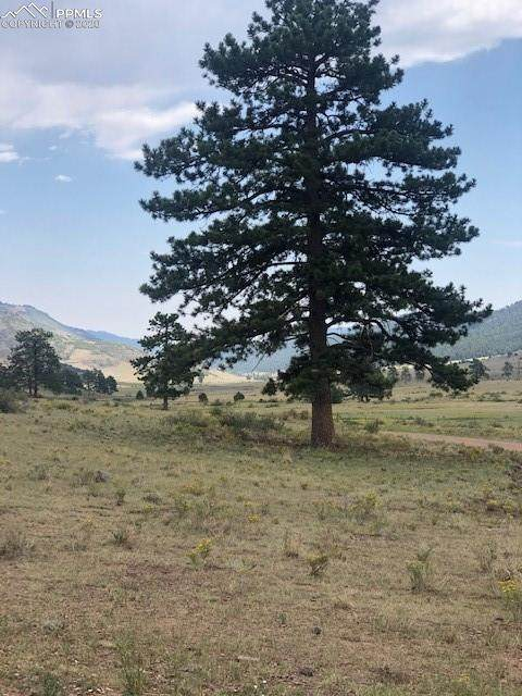 80 Elk Run, Canon City, CO 81212 (#6864389) :: Action Team Realty