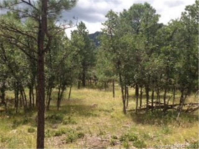667 Silver Oak Grove, Colorado Springs, CO 80906 (#6992074) :: CENTURY 21 Curbow Realty