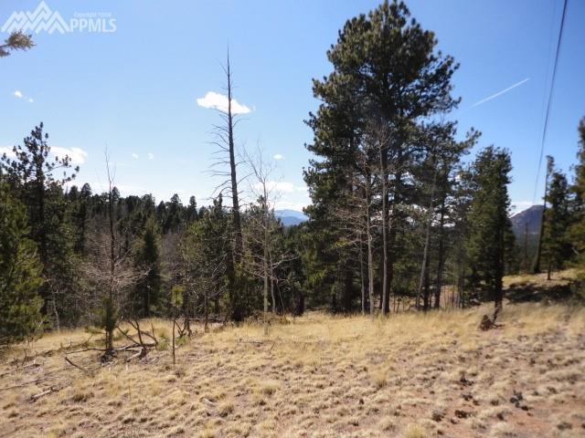 649 Spring Creek Drive, Florissant, CO 80816 (#7087417) :: The Peak Properties Group