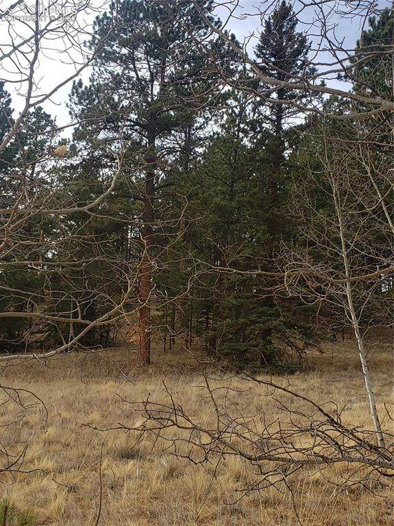 2927 Pathfinder Road, Florissant, CO 80816 (#7515829) :: Action Team Realty