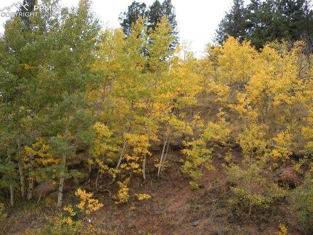 1053 Gold King Drive, Cripple Creek, CO 80813 (#7716168) :: CC Signature Group