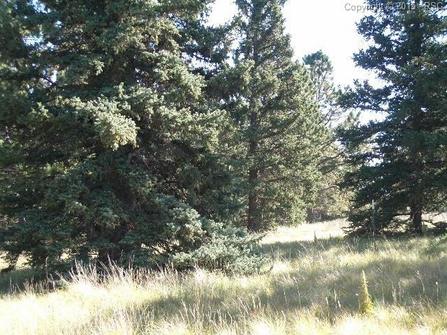 404 Silvermoon Heights, Divide, CO 80814 (#7745473) :: 8z Real Estate