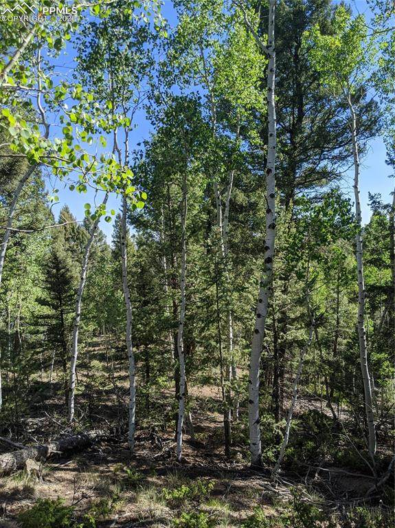 230 Pinon Lake Drive, Divide, CO 80814 (#7860486) :: Colorado Home Finder Realty