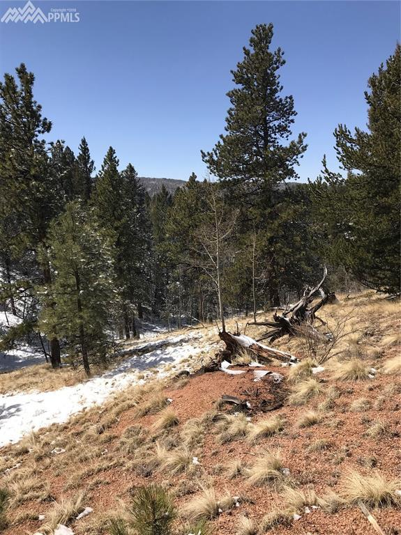 TBD Horseshoe Drive, Divide, CO 80814 (#8166223) :: 8z Real Estate