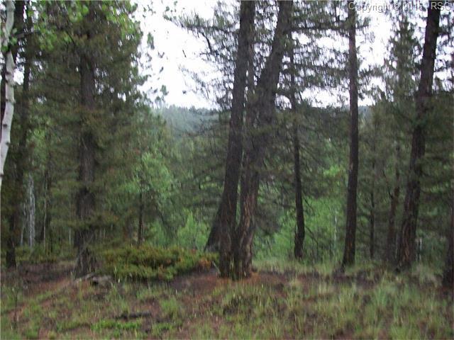 547 Spruce Lake Drive, Divide, CO 80814 (#9149016) :: 8z Real Estate