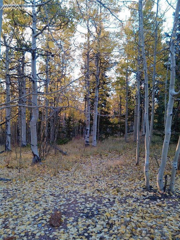 1554 Castle Ridge View, Cripple Creek, CO 80813 (#1787961) :: The Treasure Davis Team