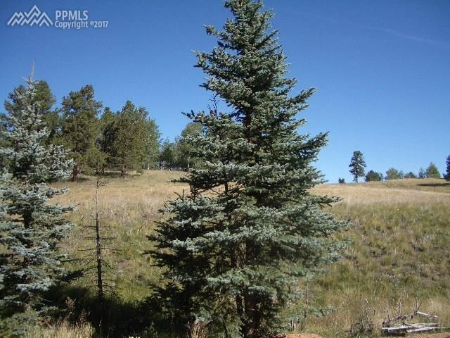 307 Pinaceae Heights, Divide, CO 80814 (#5166066) :: 8z Real Estate