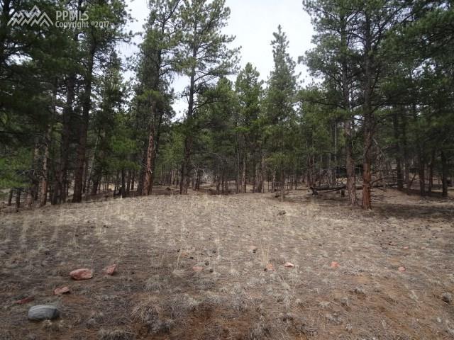 49 Crystal Spur, Lake George, CO 80827 (#8339201) :: 8z Real Estate