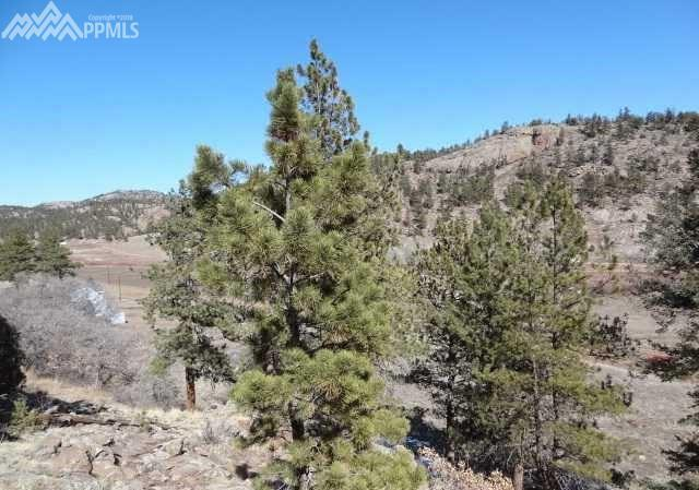 55 Ranch View Road, Florissant, CO 80816 (#9586805) :: 8z Real Estate