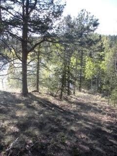 1076 Spring Valley Lane, Florissant, CO 80816 (#2096051) :: Action Team Realty