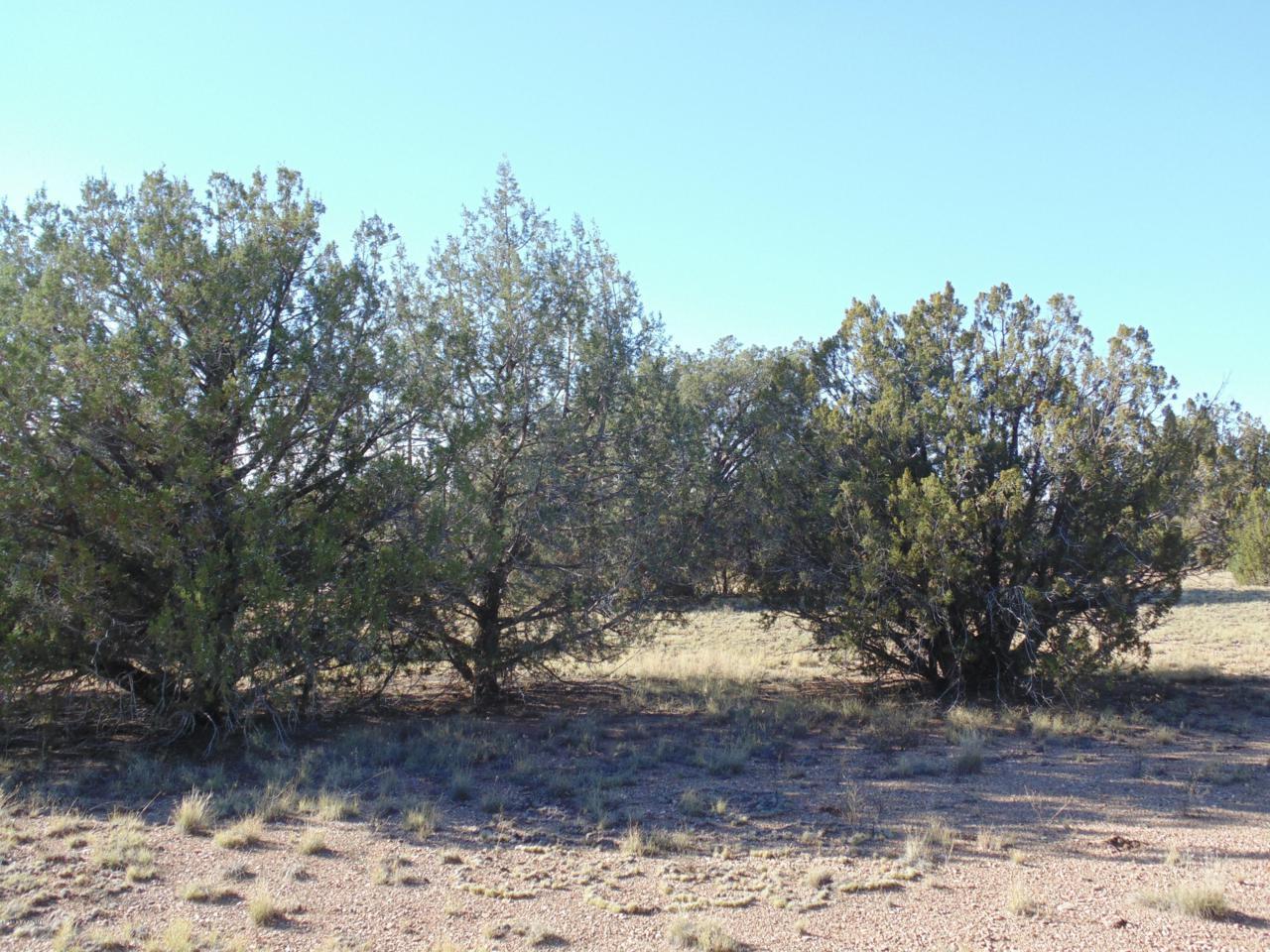 918 Sierra Verde Ranch - Photo 1