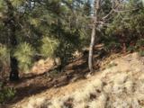 1572 Scotch Pine Drive - Photo 5