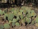 1424 Sierra Verde Ranch - Photo 6