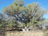 1425 Sierra Verde Ranch - Photo 30