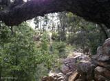 2287 Yellow Pine Trail - Photo 4