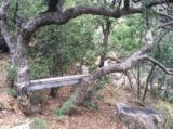 2287 Yellow Pine Trail - Photo 5