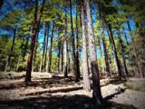 1500 Forest Service Rd 81 9.041 - Photo 1