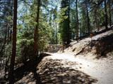 1500 Forest Service Rd 81 9.041 - Photo 2