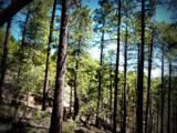 1500 Forest Service Rd 81 9.041 - Photo 4