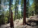 1500 Forest Service Rd 81 9.041 - Photo 8
