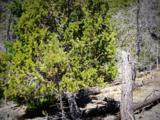 1500 Forest Service Rd 81 5.86 - Photo 16