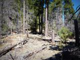 1500 Forest Service Rd 81 5.86 - Photo 17