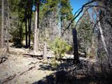 1500 Forest Service Rd 81 5.86 - Photo 18