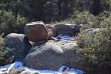 9845 Cougar Canyon Road - Photo 9