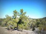 12885 Spiral Dancer Trail - Photo 11