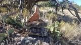 24820 Mountain Home Trail - Photo 48