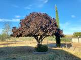 20470 Cactus Wren Drive - Photo 39