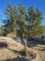 20470 Cactus Wren Drive - Photo 41